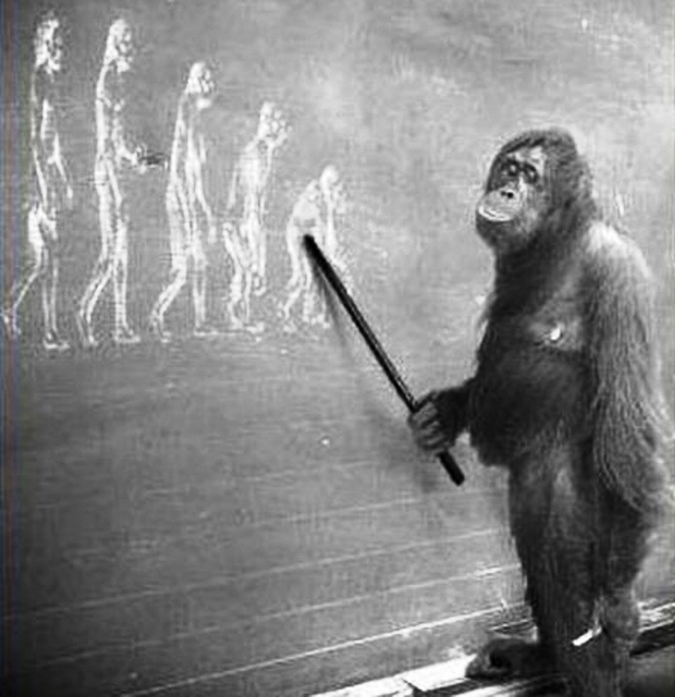 Darwin, Darvin, Дарвин, Эволюция, естественный отбор, происхождение человека