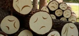 коррупция, лес, природа, лесорубы, расхитители, вырубка, воры, «Совершенно Секретно», Китай, чиновники, древесина, экспорт, ресурсы, страна, Россия, проблемы, лесной кодекс, лесники