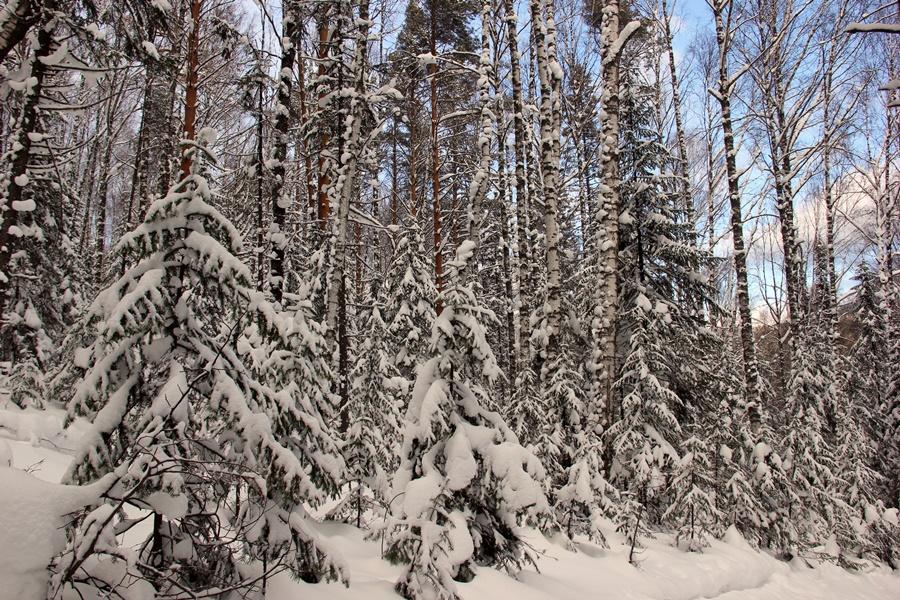 Таганай-лес