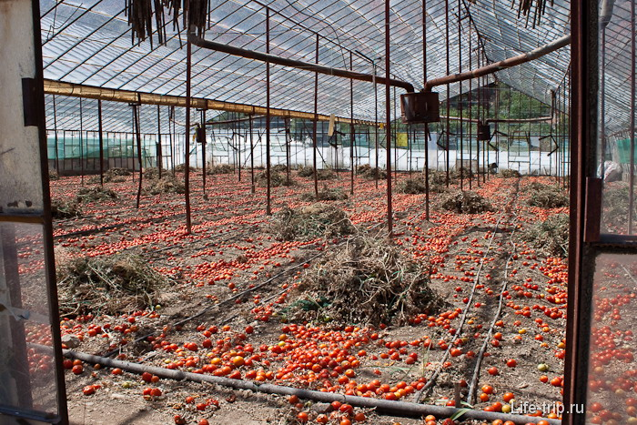 Праздник помидорной жизни. И это уже в мае месяце. К слову, помидоры тут один из самых дешевых овощей.